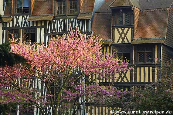 Kirschblüten, Rouen